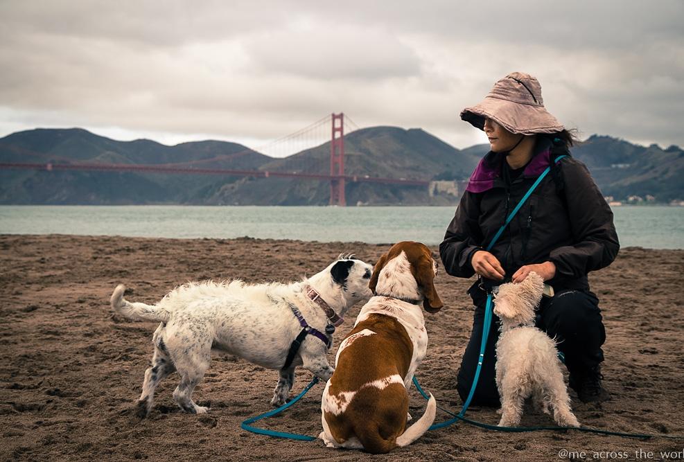 SF Dog Walker