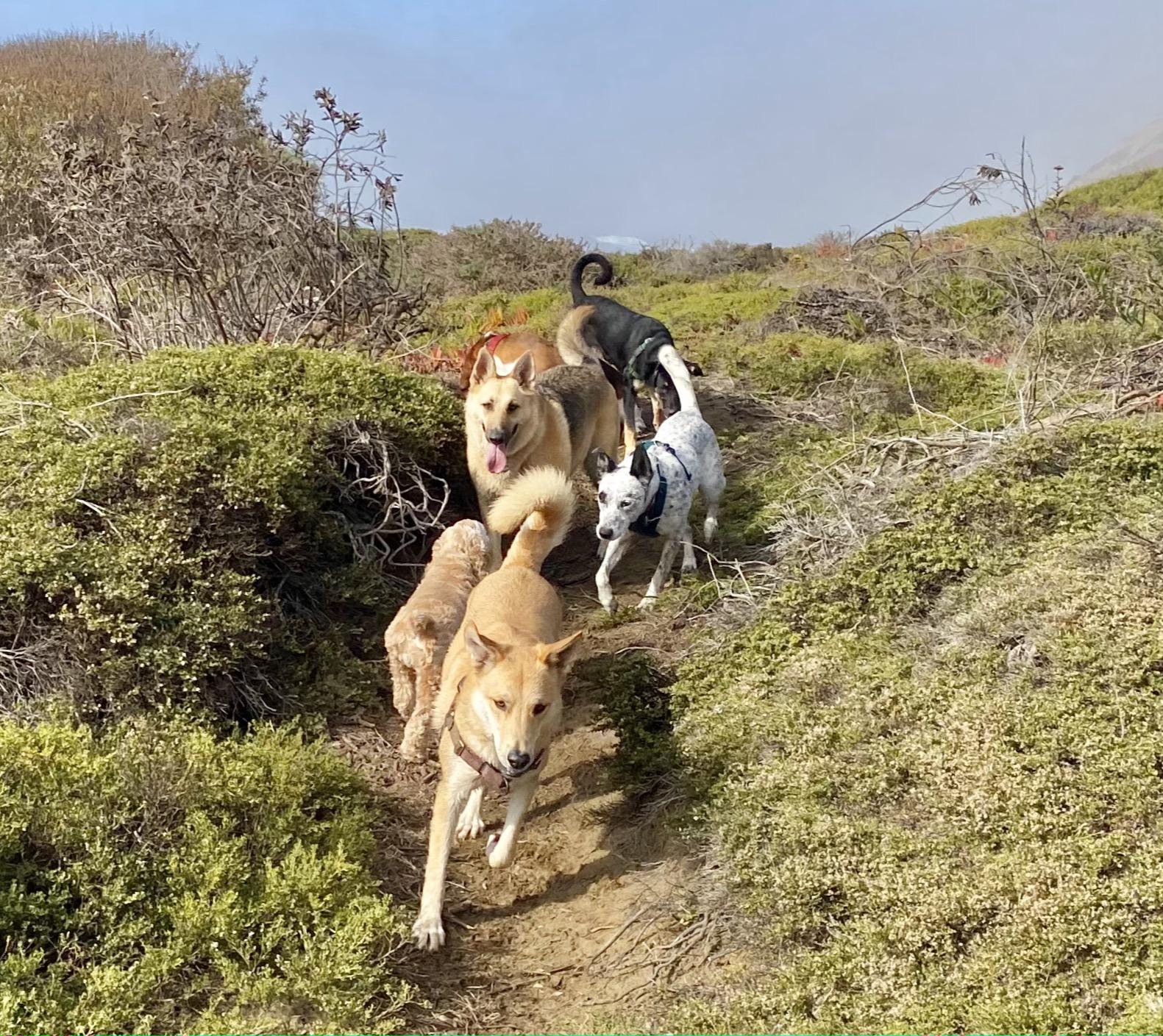 Trail Dawgs!