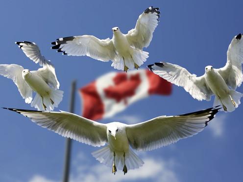 Estudiantes saudíes en Canadá, obligados a dejar el país