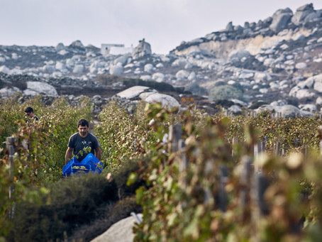 T-Oinos, the wine of Aeolus in the heart of the Cyclades