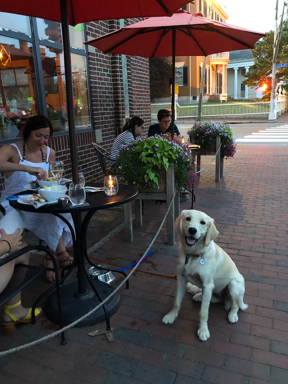 Dog friendly patio dining in Portland, Maine.