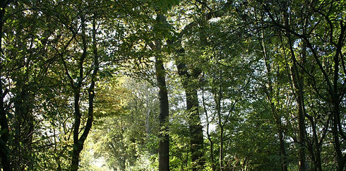 Forest%20Trail_edited.jpg