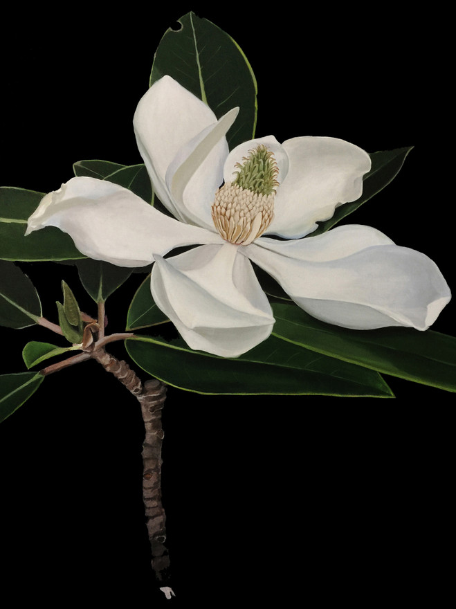 Magnolia and Honey Bee