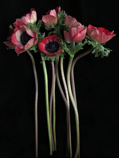 BF: Red Bunch of Anemones