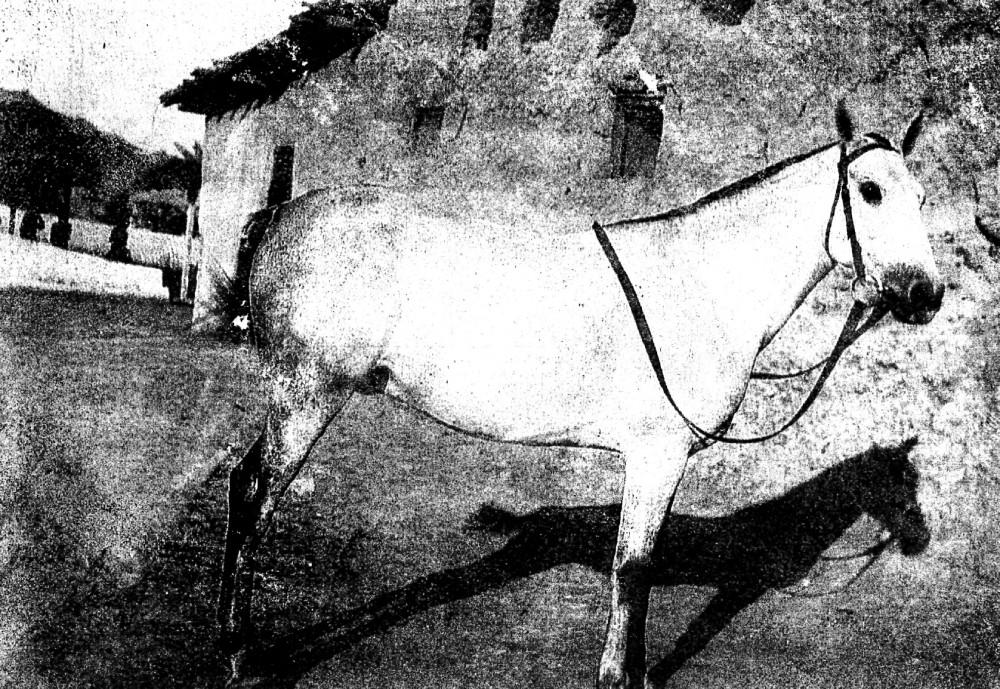 Gertrude's Favourite 1918