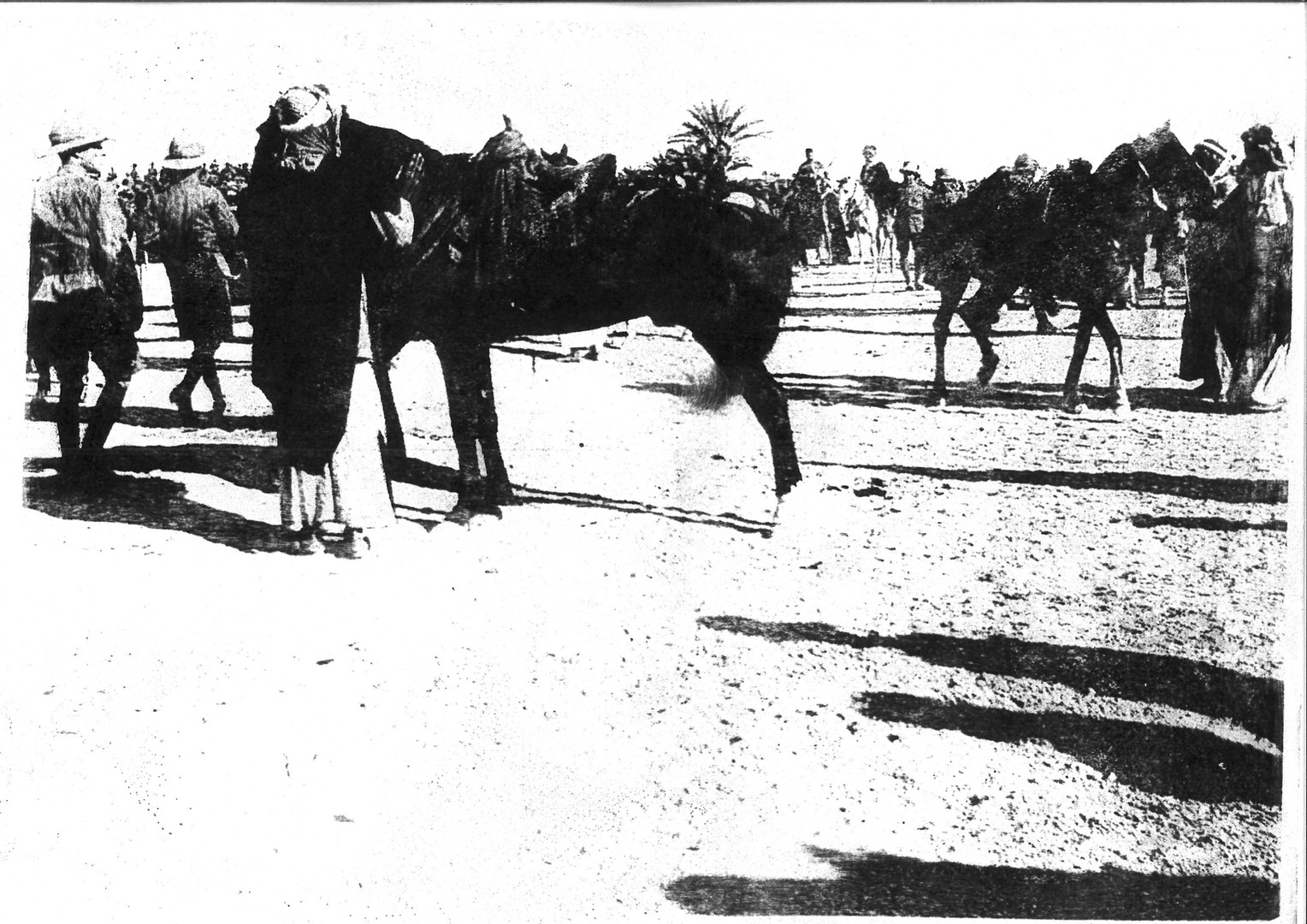 Basrah Horse and Cattle Show 1918