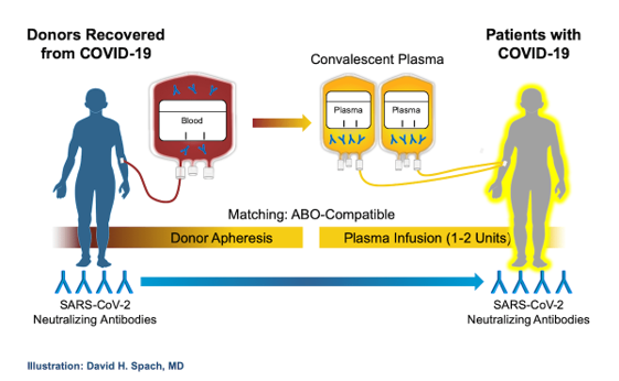 COVID-19 convalescent plasma donor collection and patient transfusion process