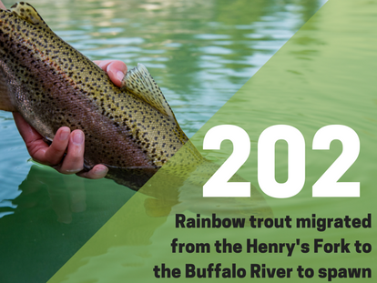 Buffalo River - Spring Monitoring Summary