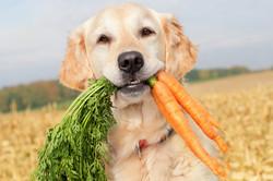 dog-eating-carrots.jpg