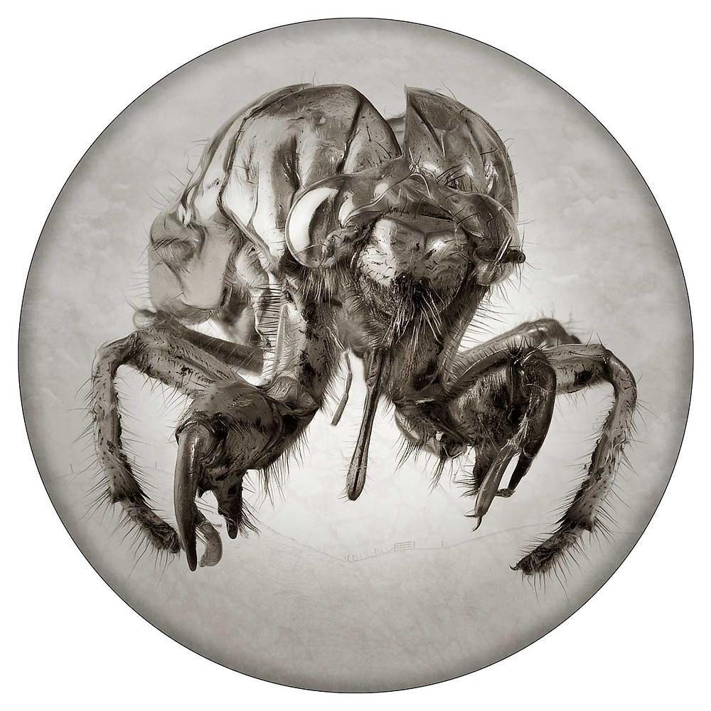 Cicada by Harry Janssen
