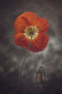 Image by Marina De Wit
