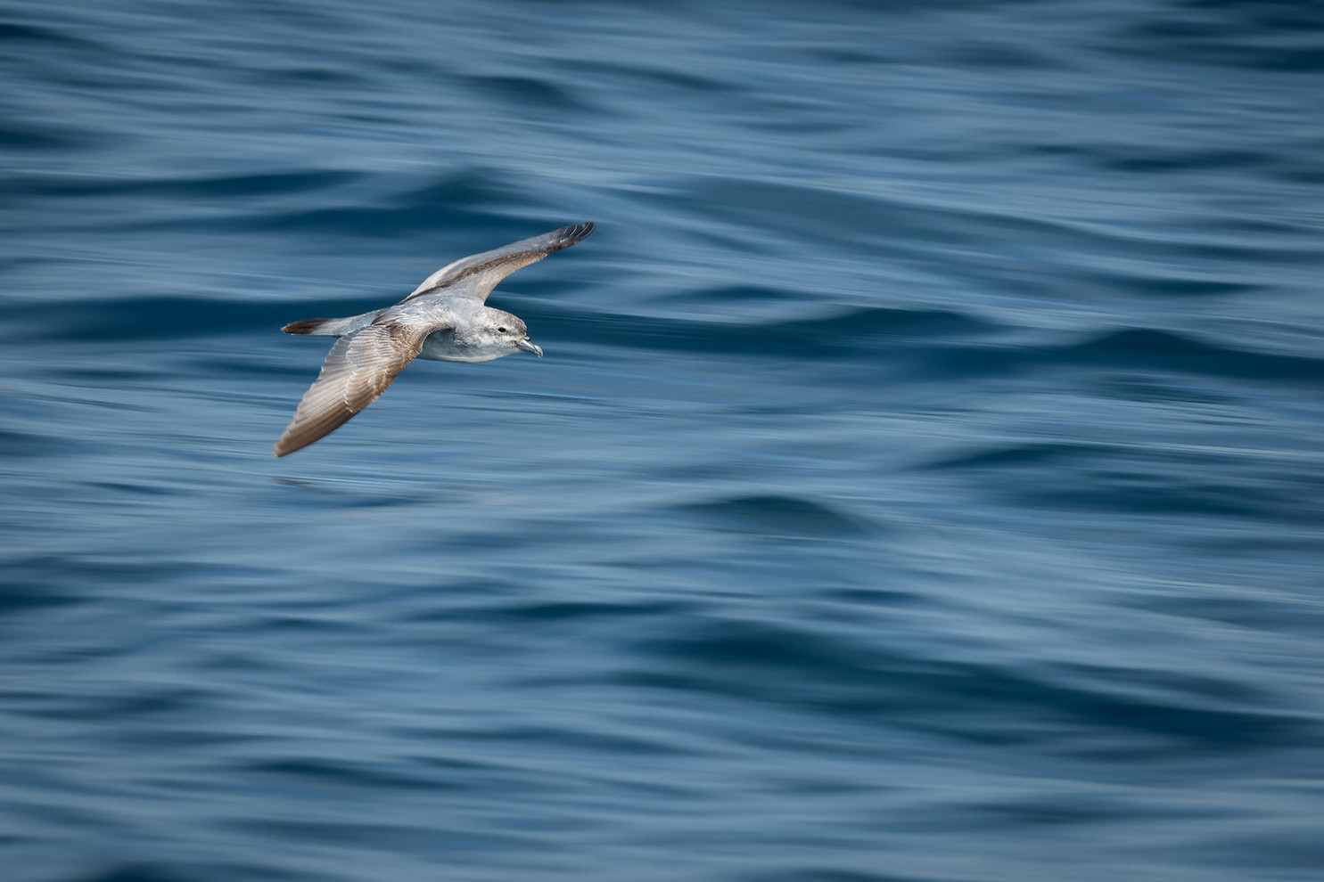 Tony Whitehead | Hauraki Gulf