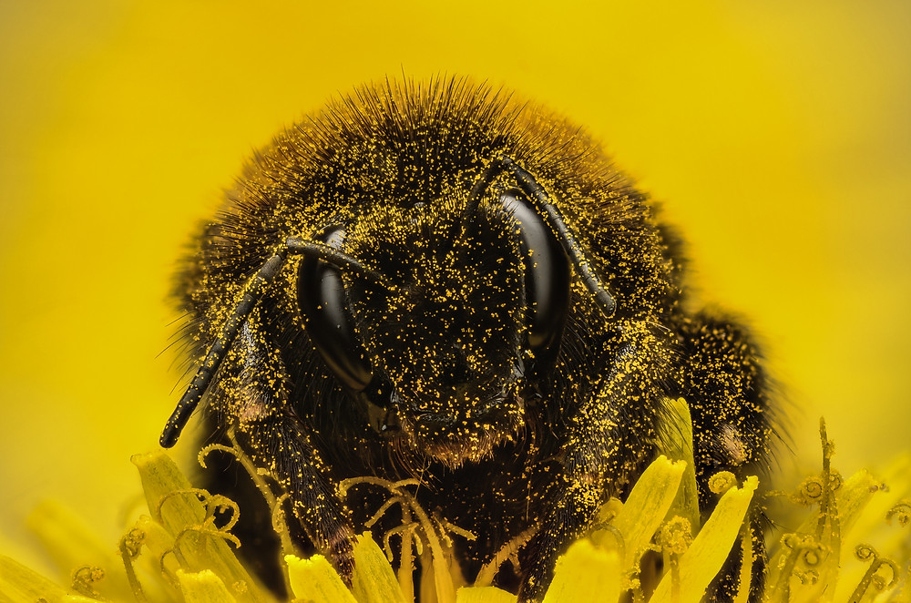 Bumble Bee by Murray McCulloch