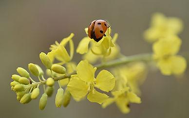 nikon-digital-slr-d3500-feature-ladybug.