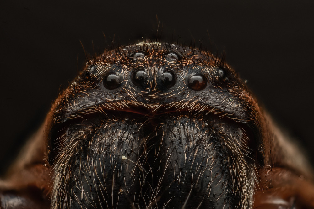 Spider Image by Murray McCulloch