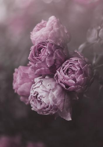 Purple Haze by Marina De Wit
