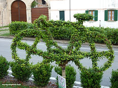 This Bicycle could use a Trim!...at Cison di Valmarino Italy.