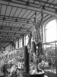 Galerie de Paleontologie-bones