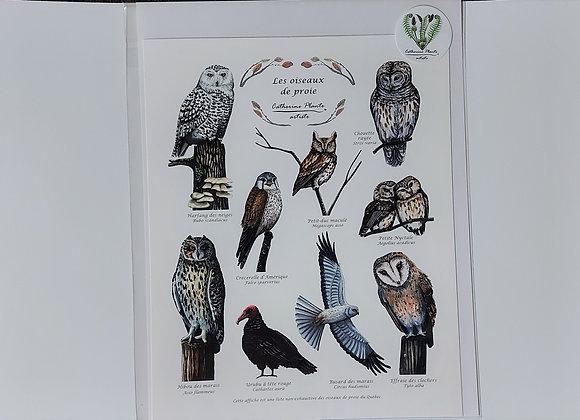 Affiche oiseaux de proie