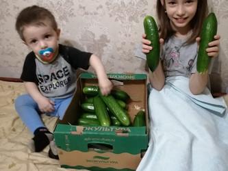 Свежие овощи к столу