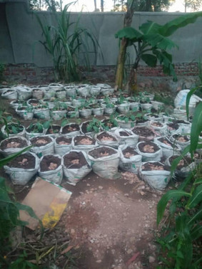 Bags Ready To Plant