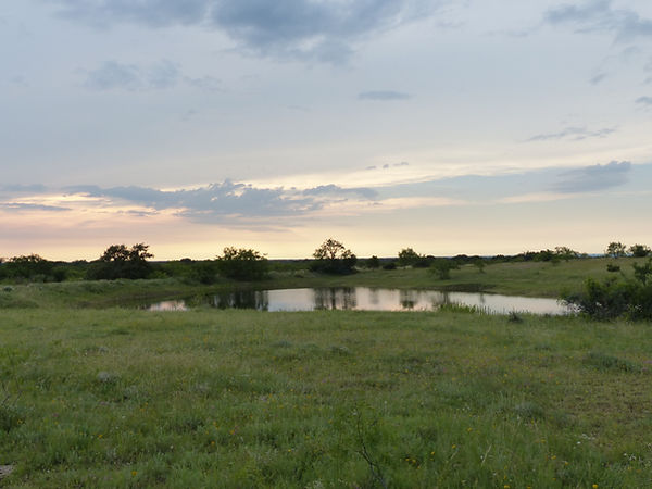 215 Acres in McCulloch County - SOLD
