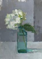 Little White Hydrangea