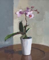 Circle Orchid