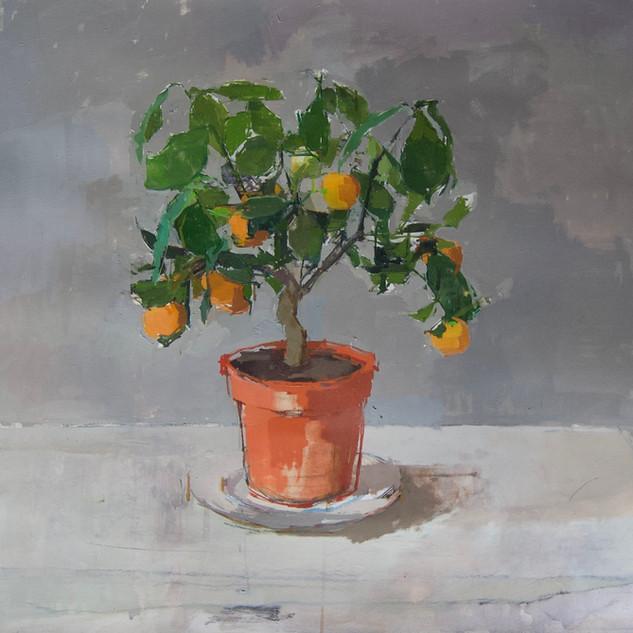 Little Lockdown Orange Tree