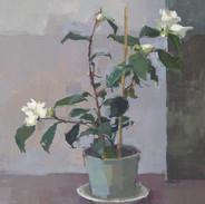 January Camellia