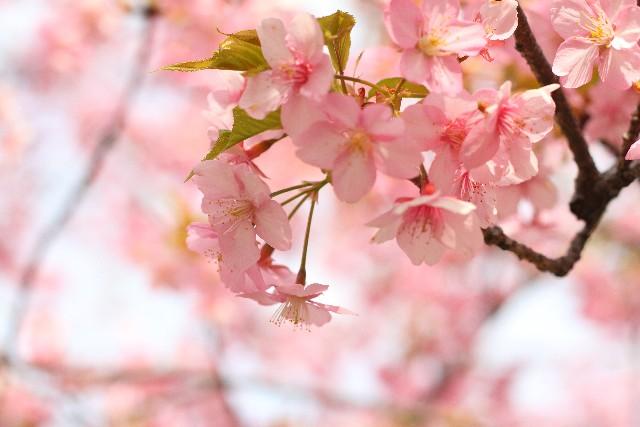 Rates-us   日本   動物が好きな方専門の結婚相談所 桜