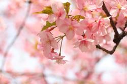 Rates-us | 日本 | 動物が好きな方専門の結婚相談所 桜