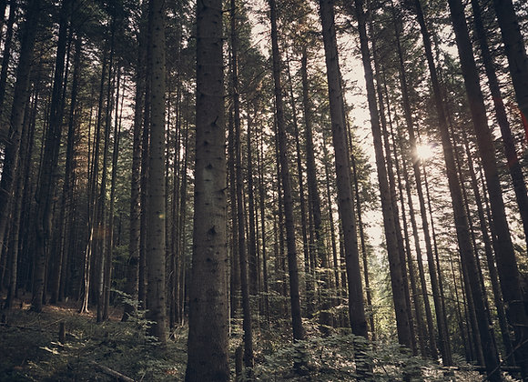 Healing the Land Webinar