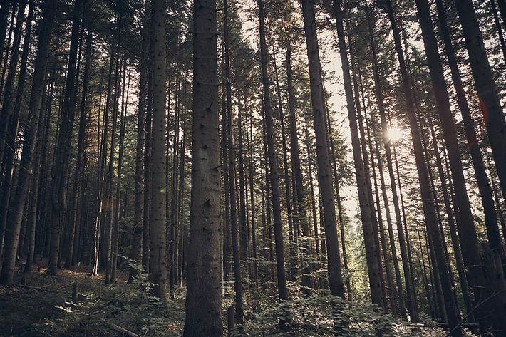 Groesbeek natuur camping