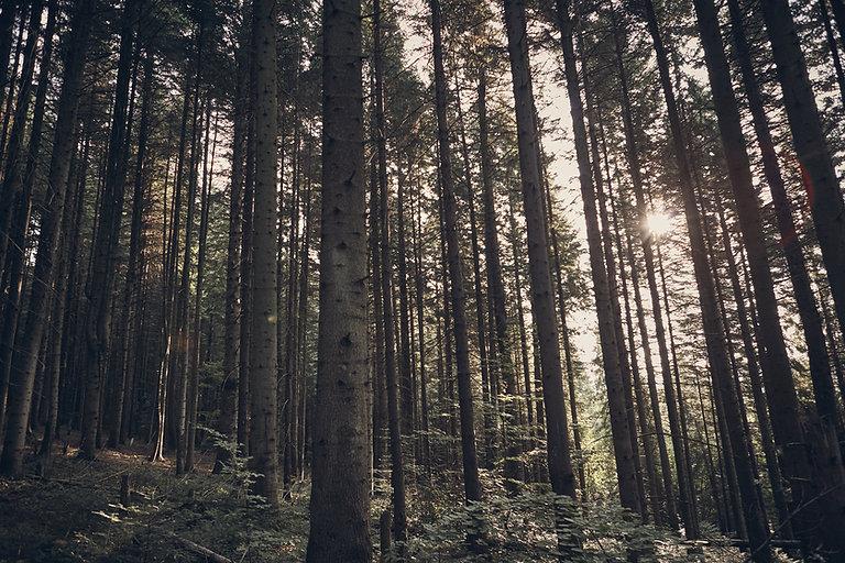 Groen bos