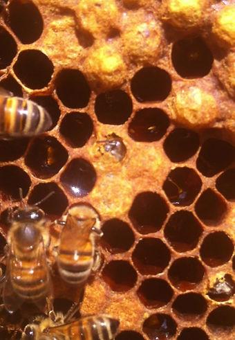 Nascita di un'ape
