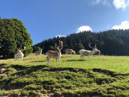Στο πάρκο Άγριας Ζωής του Aurach, Kitzbühel