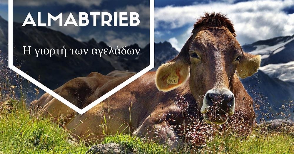 Η γιορτή των αγελάδων