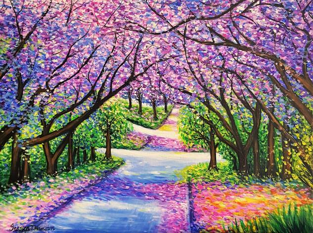 Path of Jacaranda Trees