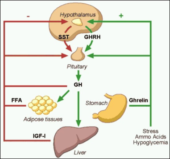 growth-hormone.jpg