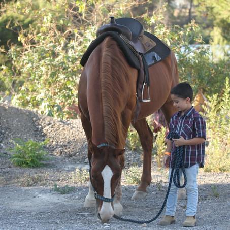 טיפול באמצעות סוסים