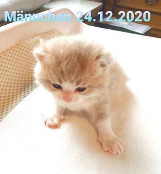 20210111_130924_edited.jpg