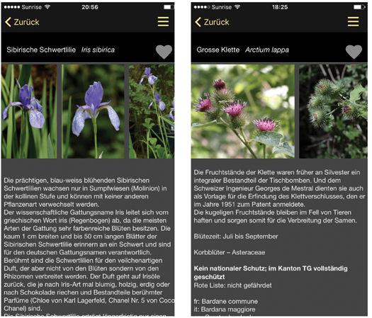 Web_Zusammenstellung_Screenshots_4_klein