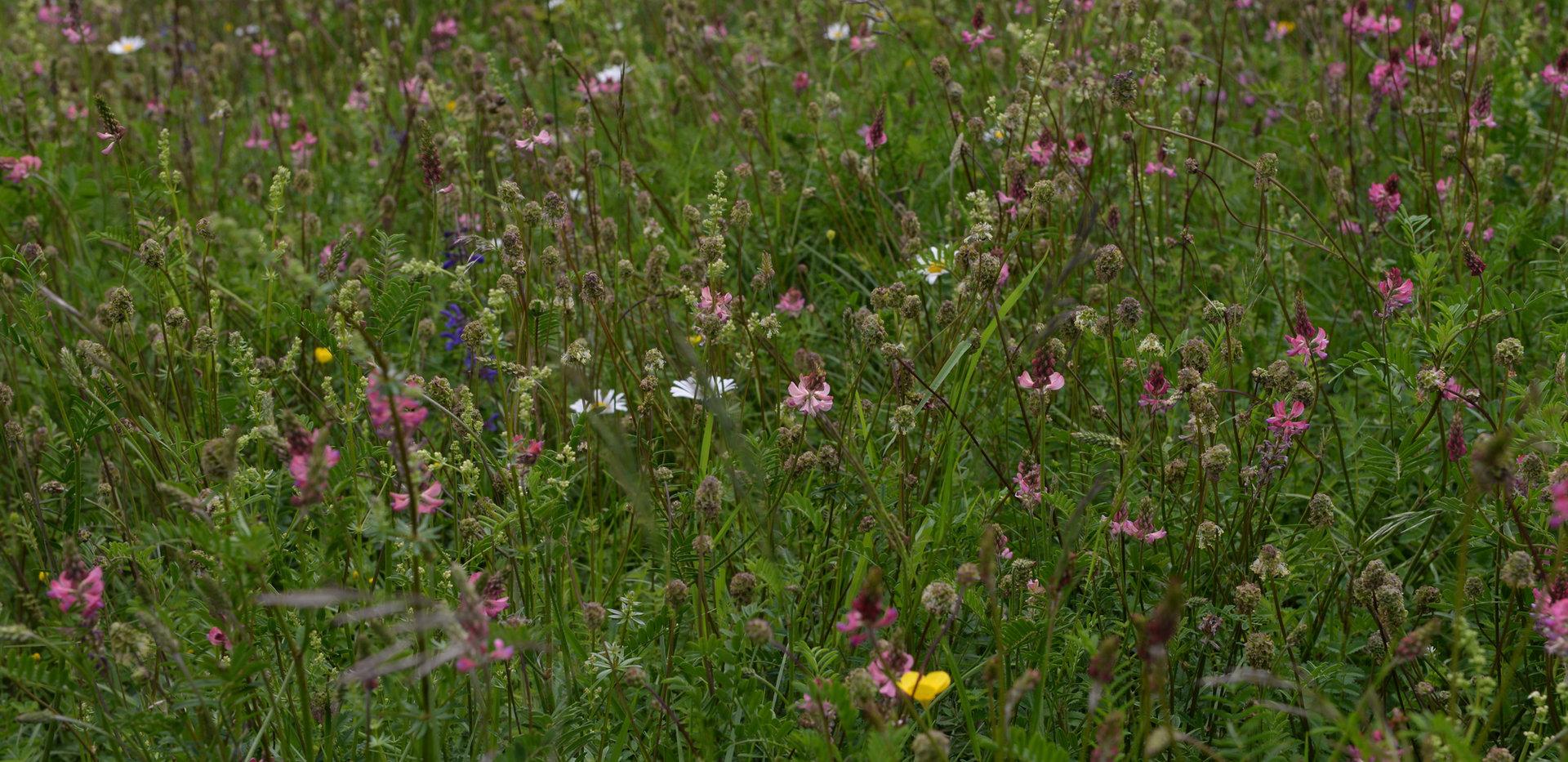 Detail Flora, Aargauer Stalden, Bern © Wolfgang Bischoff