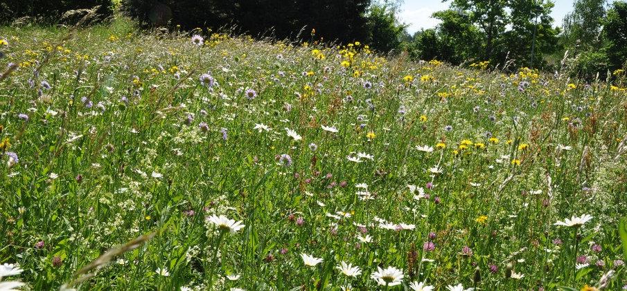 Artenreiche Blumenwiese Schosshaldenfriedhof Bern © Wolfgang Bischoff