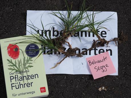Kurs Artenkenntnis Wiesenpflanzen, Mitarbeiter Grünstadt Zürich