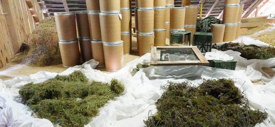 Trocknung und Weiterverarbeitung Saatgut  © Wolfgang Bischoff