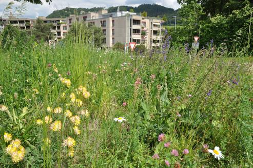 Ökologische Aufwertung Grünflächen Bolligen