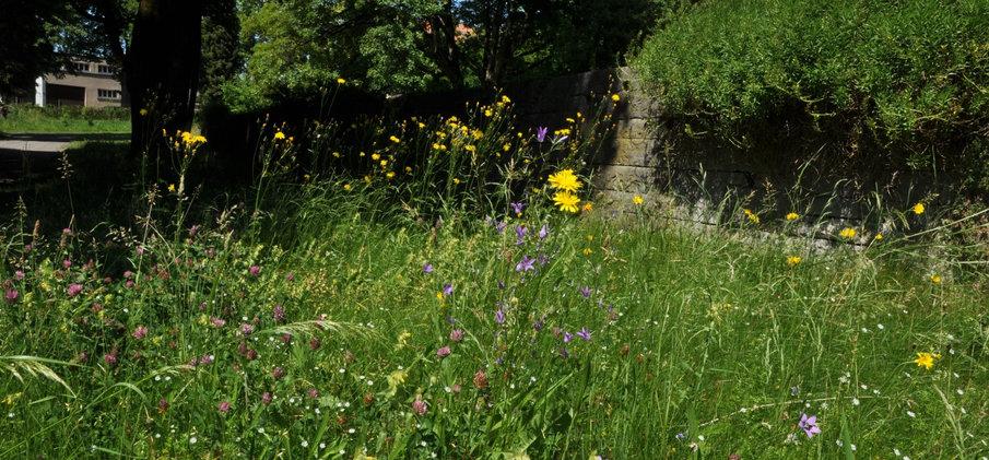 Artenreiche Blumenwiese Bremgartenfriedhof Bern © Wolfgang Bischoff