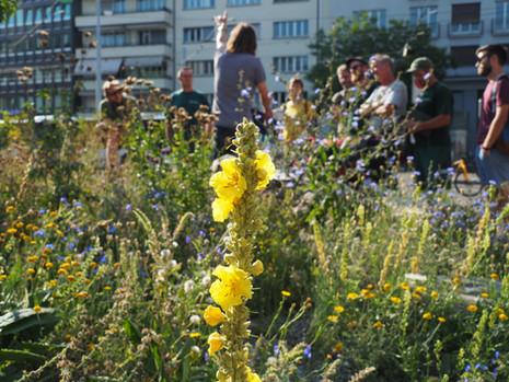 Kurs Artenkenntnis Wildstauden, Mitarbeiter Grünstadt Zürich